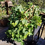 keter elevated garden bed instructions